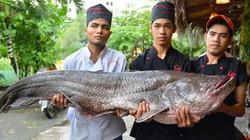 """Tận thấy cá """"khủng"""", phải 3 người khiêng ở Sài Gòn"""