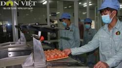 Chuỗi chăn nuôi 3F: Xử lý 45.000 quả trứng sạch mỗi giờ