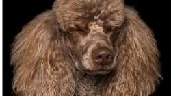 """Đáng yêu với vẻ biểu cảm """"so deep"""" của những chú chó"""