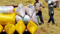 Vựa lúa Tây Nam Bộ  vấp nỗi lo cơ chế, chính sách