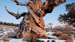 Bật mí 8 khu rừng cổ xưa nhất thế giới