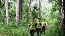 Chủ rừng liên kết cộng đồng dân cư để bảo  vệ rừng