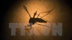 Mỹ thử nghiệm vắcxin phòng ngừa virus Zika trên cơ thể người