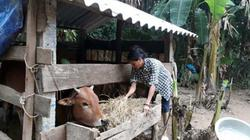 Hậu lũ lụt tại miền Trung: Vừa thoát nghèo lại thành tay trắng
