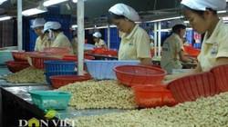Việt Nam đẩy mạnh phát triển điều sạch