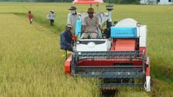 Miễn thuế đất nông nghiệp đến hết 2020