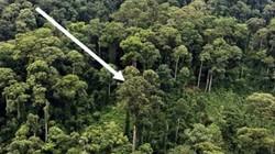 Cận cảnh cây nhiệt đới cao nhất thế giới ở Malaysia