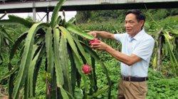 """""""Vinh điên"""" - tỷ phú mê trồng cây trái ở bản sâu"""