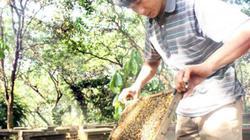 """""""Cuộc chiến"""" ong nội - ong ngoại: Cấm phải có cơ sở rõ ràng!"""