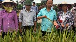 Hỗ trợ nông dân thâm canh lúa với phân bón Tiến Nông