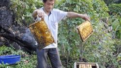 """""""Vẫn cho nuôi ong ngoại ngoài 4 huyện cao nguyên đá"""""""