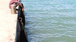 Đã biết nguyên nhân cá chết hàng loạt ở Khánh Hòa