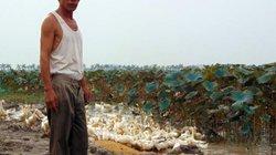 Thả sen, nuôi vịt… thu lãi nửa tỷ đồng mỗi năm