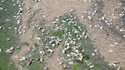 Xóa sổ bãi thải ven sông Hồng ngập trắng bao cao su