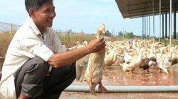 """NTM Đồng Tháp: """"Đổi đời"""" nhờ nuôi vịt đẻ"""