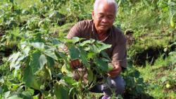 Chuyện U70 vẫn nghiên cứu những loại cây trồng và giống lúa mới