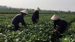Công ty CP Giống cây trồng Trung ương (Vinaseed) đi đầu trong SXNN công nghệ cao