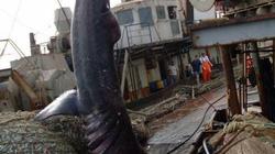 Trút mẻ lưới lớn, ngư dân kinh ngạc khi thấy thứ chui ra