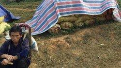 Dân mạng kêu gọi mua giúp gừng tồn ứ cho bà con Hà Giang