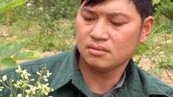 Người tạo niềm tin cho nông dân trồng cây hòe