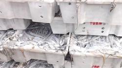 Ngư dân trúng mẻ cá hố nửa tỷ đồng trong một đêm
