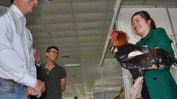 """Rủ nhau đến ngắm gà Đông Tảo """"khủng"""" chân vảy rồng ở Hội chợ Hà Nội"""