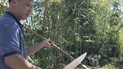 """Người """"dát bạc"""" cho cây nứa rừng Quảng Ngãi"""