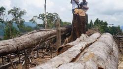 Chưa chuyển cơ quan điều tra tỉnh hồ sơ vụ phá rừng Tiên Lãnh
