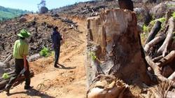 """Sau 60,9ha rừng bị tàn phá, rừng Bình Định lại tiếp tục """"chảy máu"""""""