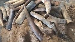 Khởi tố vụ buôn lậu hơn 1,3 tấn ngà voi