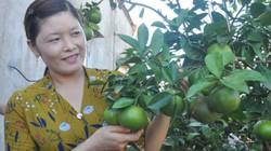 Làm giàu ở nông thôn: Ở nhà quanh quẩn rau, cam vẫn kiếm trăm triệu