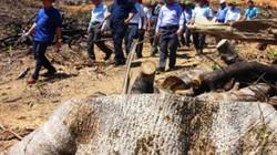 Vụ phá 60,9ha rừng tại Bình Định: Đề nghị kiểm điểm Chủ tịch huyện