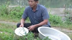 Làm giàu ở nông thôn: Tỷ phú nuôi cá, vịt đi lên từ tay trắng và nợ nần