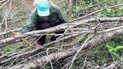 Phá tiếp 20ha rừng ở Bình Định: Lại lơ là quản lý
