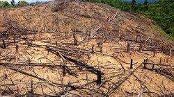 Bình Định: Thêm một vụ phá rừng bị khởi tố