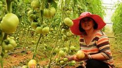 Gần 40% số doanh nghiệp đầu tư vào nông nghiệp, nông thôn thua lỗ