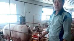"""Mặc rớt giá, U70 vẫn """"mát tay"""" xuất chuồng 2.000 lợn giống/tháng"""