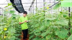 Lâm Đồng sẽ có nhiều trang trại dùng công nghệ kết nối vạn vật IoT
