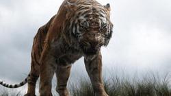 """Truy lùng hổ cái giết 4 người vì thích """"mùi vị thịt người"""" ở Ấn Độ"""