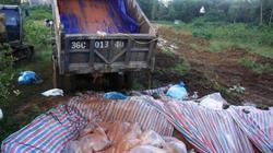Chùm ảnh:  Tiêu hủy gần 6.000 con lợn chết trong lũ tại Thanh Hoá