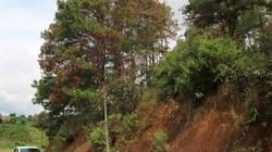 Điều tra vụ phá rừng từ chiếc điện thoại đánh rơi tại hiện trường