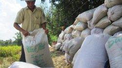 Trồng đồng nhất một giống, gạo Việt được trả cao hơn 50-60 USD/tấn