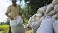 Xuất khẩu gạo: Mục tiêu nhiều nhưng... quên chuyện quan trọng nhất!