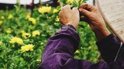 Bất chấp mưa lũ, làng hoa Tây Tựu vẫn cung ứng đủ cho dịp lễ 20.10