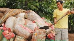Ủ phân hữu cơ vi sinh từ vỏ cà phê: Sạch mà hay, tiết kiệm mà hiệu quả cực cao