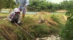 Quảng Ngãi: Cá chết nổi la liệt ở khu vực đập Hố Chuối