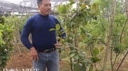 """Có phân Lâm Thao trồng cây """"của hiếm"""" trong rừng: Tưởng khó nhằn mà lại ngon ơ"""