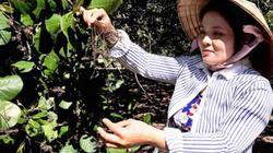 Có 2 triệu/ha hỗ trợ người trồng điều nhưng không... xác minh được thiệt hại