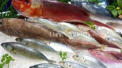 """EU chính thức rút """"thẻ vàng"""" cảnh cáo đối với hải sản Việt Nam"""