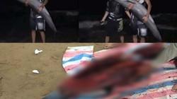 Điều tra vụ cá heo bị xẻ thịt ở bãi biển Đồ Sơn